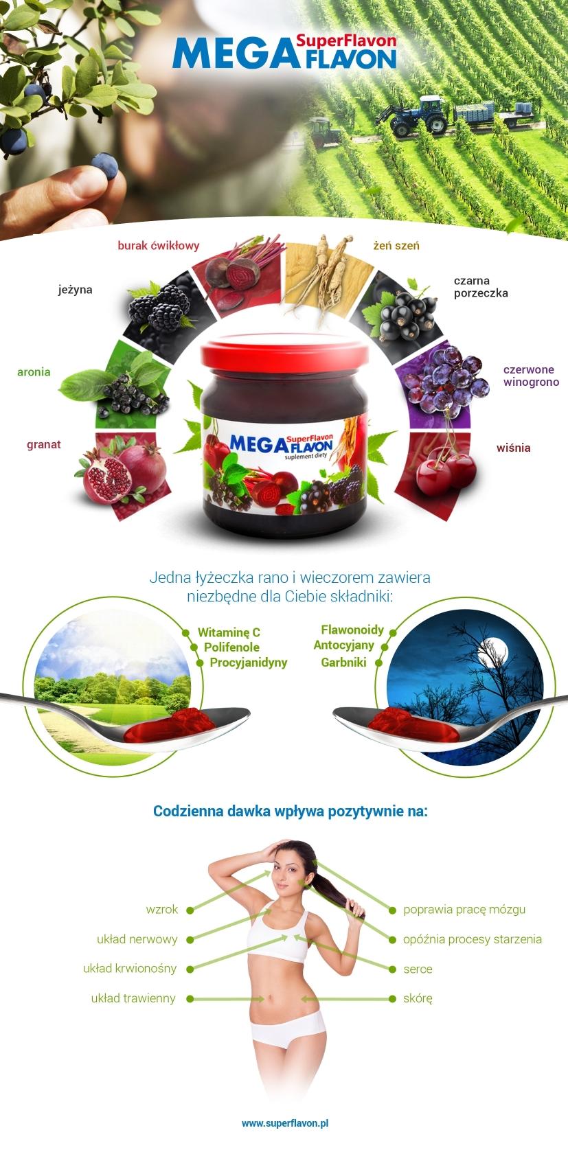 Infografika Mega Flavon